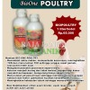 WA 081-355-555-216 suplemen untuk ayam bangkok, jual obat untuk ayam, harga suplemen untuk ayam