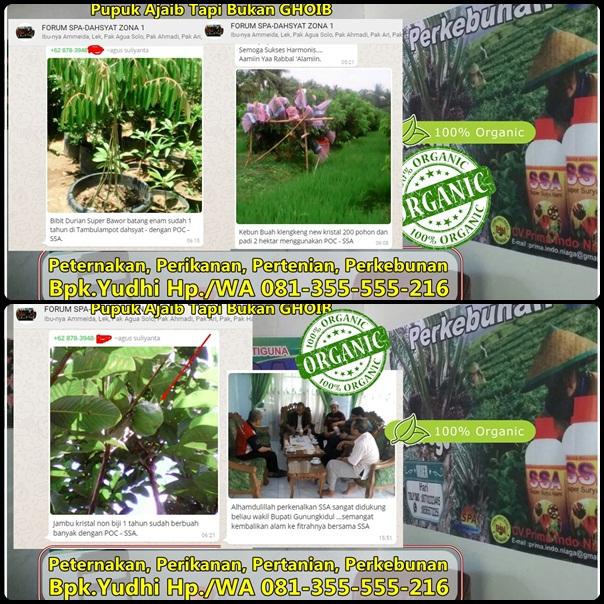 jual-pupuk-organik-cair-ssa-pupuk-tanaman-buah-pupuk-organik-penguat-akar-jual-pupuk-perangsang-buah-pupuk-penguat-batang-pupuk-pembasmi-hama