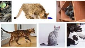 jual tas kucing, pet cargo, pet travel, harga tas kucing jakarta