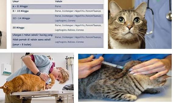 tas kucing kaskus, tas kucing pico, tas ransel untuk bawa kucing, tas ransel untuk kucing, tas ransel untuk membawa kucing, tas selempang untuk kucingtas travel untuk kucing,tas untuk bawa kucing